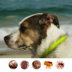 DOODA Pet Dog Flea Reprllent Collar Cat Health Supplies Safe Human Insect repellent Wristband