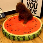 Yani HP-PK1 Pet Dog Simulation Fruit Mats Colorful Squishy Cotton Dog Beds Pet Kennels
