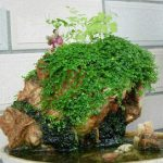Foliage Plant Rockery Grass Seeds Bonsai Decoration