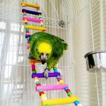 58cm Pet Bird Wooden Swing Flexible Small Pets Climb Ladder Bird Parrot Toys