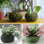 11cm Soilless Culture Dry Moss Planting Ball Garden Plant Potted Hydrating Flowerpot
