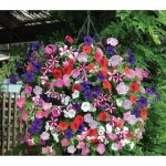 100pcs Mixed Colors Garden Petunia Flower Seeds Balcony Bonsai Calibrachoa